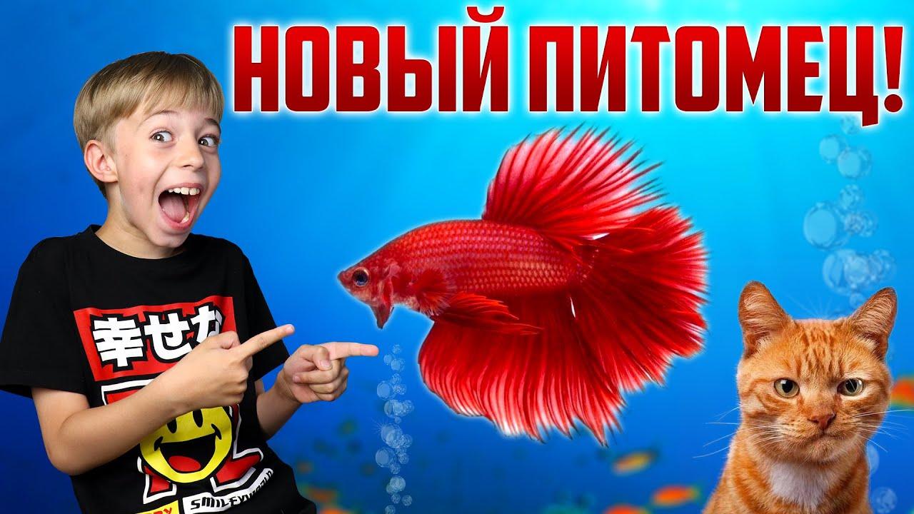Рыжий кот - У НАС НОВЫЙ ПИТОМЕЦ! - Мультики для детей