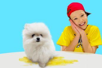 Макс тренирует маленького щенка шпица