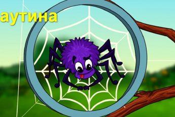 Профессор Почемушкин – Откуда паук берет свою паутину?