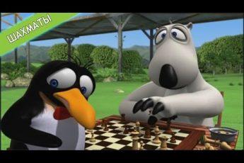 БЕРНАРД: Шахматы