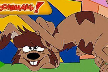 Тунималсы - 23 - Собака | Мультфильмы |