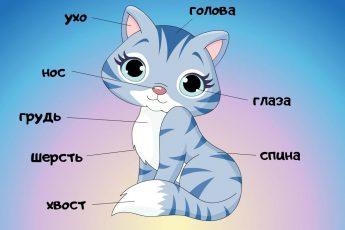 🐅 Части тела животных для детей. Учим животных. Видео для малышей. 2 серия.