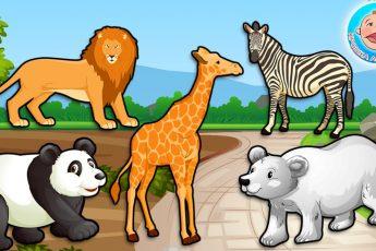 Животные - Кто живет в Зоопарке? - Мультики для детей